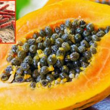 Papayas Linked to Deadly Salmonella Outbreak!