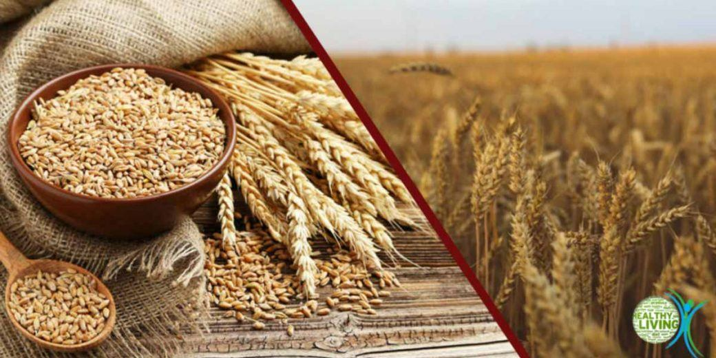 Stop Eating Wheat if You Have These 10 Signs of Gluten Sensitivity