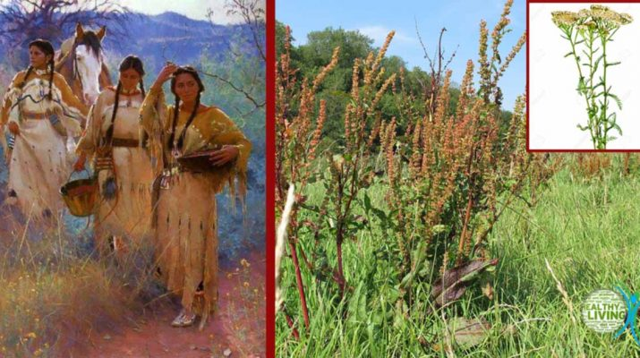 Top 10 Herbs Native Americans Used to Treat Many Diseases