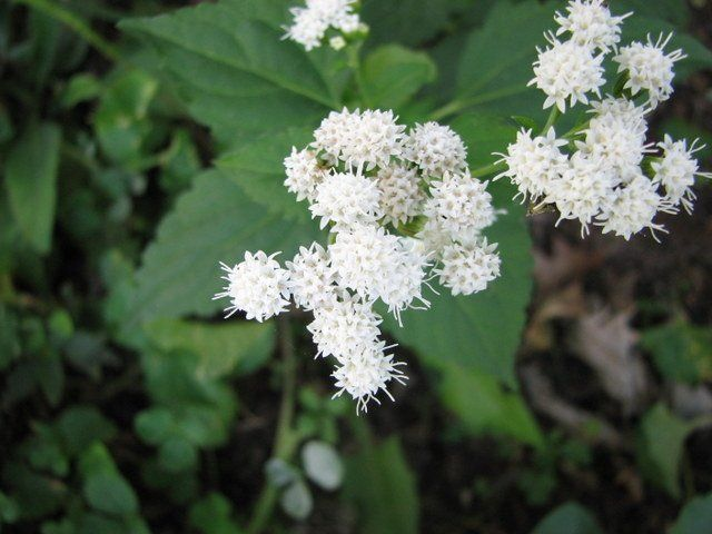 11 poisonous plants you should avoid at all costs