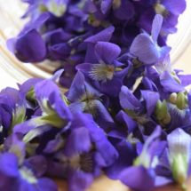 The Many Surprising Health Benefits of Sweet Violet