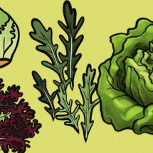 10 Reasons Why You Should Start Eating Lettuce Today
