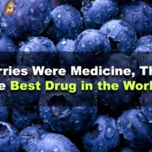 If Blueberries Were Medicine, They Would Be the Best Drug in the World Ever