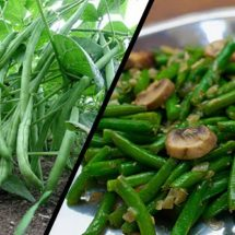 Start Eating Green Beans to Improve Heart Function and Cholesterol Levels