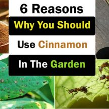 6 Amazing Ways You Can Use Cinnamon in Your Garden