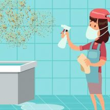 Get Rid of Mold as Soon as Possible – It Can Seriously Damage Your Health!