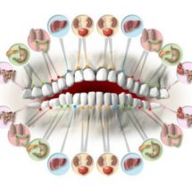Each Tooth Is Associated with an Organ in the Body – Pain in Each Tooth Can Predict Problems in Certain Organs