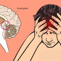 How Fluoride Damages the Human Brain, Especially the Pineal Gland