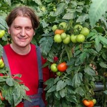 This is How to Correctly Plant Tomatoes to Grow 5–8 ft Plants