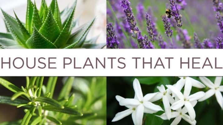 6-House-Plants-To-Grow-In-Your-Bedroom-That-Can-Dramatically-Improve-Your-Health