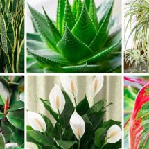 These Plants Are Oxygen Bombs And They Clean The Air At Your Home