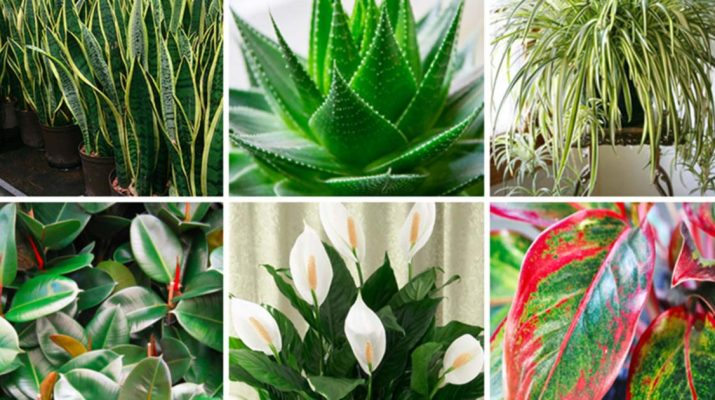 These-Plants-Are-Oxygen-Bombs-And-They-Clean-The-Air-At-Your-Home