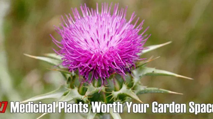 27-Medicinal-Plants-Worth-Your-Garden-Space