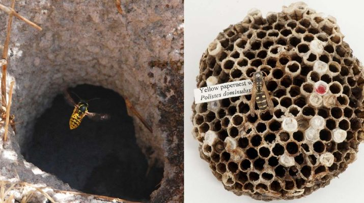5-Genius-Ways-To-Get-Rid-Of-Wasps-and-Keep-Them-Away