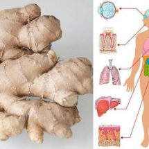 Eat Ginger Every Day for 1 Month and These 8 Things Will Happen to Your Body!