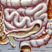 How the Bacteria in Our Gut Influences Our Minds