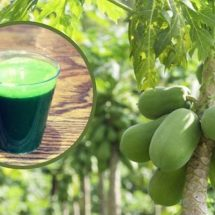 Increase Blood Platelets, Heal Ulcers And Regulate Blood Sugar Levels With Papaya Leaf Juice