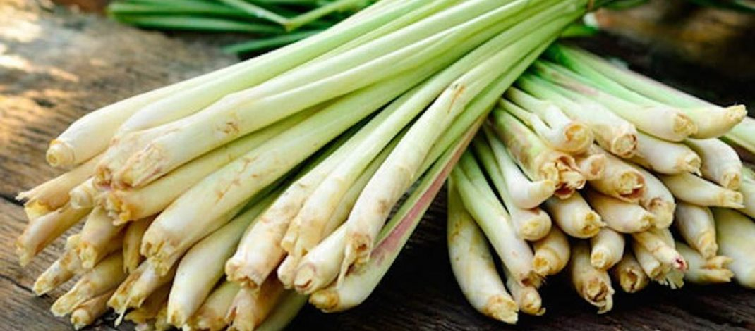 Use Lemongrass To Kill Bacterial, Fungal And Yeast Infections