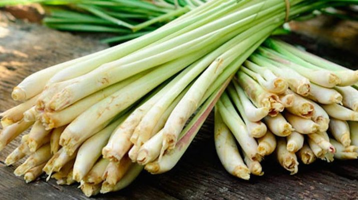 Use-Lemongrass-To-Kill-Bacterial,-Fungal-And-Yeast-Infections