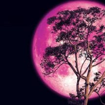 Prepare Yourself For A Major Energetic Shift During The Full Strawberry Moon On June 16th