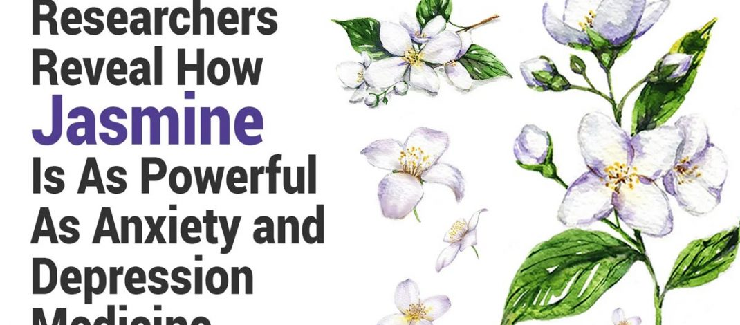 Researchers Reveal How Jasmine Is As Powerful As Anxiety and Depression Medicine