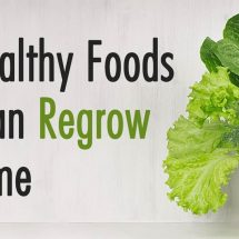 12 Healthy Foods You Can Regrow At Home Forever