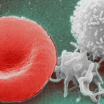 USC Researchers Discover How to Regenerate Entire Immune System in 72 Hours