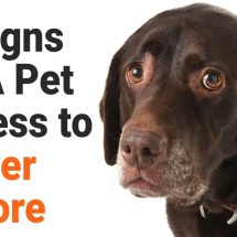 5 Signs of A Pet Illness to Never Ignore